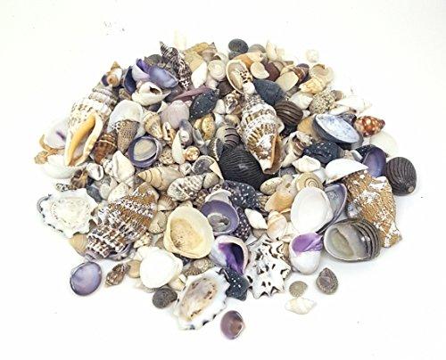 100g Small Sea Shells Mix 1, SeaShells for Craft and Display