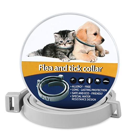QcoQce 60cm Collare Antipulci Cane Gatto, Collare Antiparassitario Antizecche Regolabile, Impermeabile, Estratti Naturali Puri di Oli Essenziali,8 Mesi di Prevenzione Continua