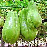 Semillas de chayote para jardín, frutas, verduras, bonsái, 30 unidades