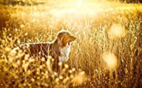 オーストラリアンシェパードのペットの犬の動物の風景 大人のためのDIYダイヤモンドペインティングキット、5Dフルラウンドドリルダイヤモンドペインティングキット刺繡芸術家の装飾 40X50cm