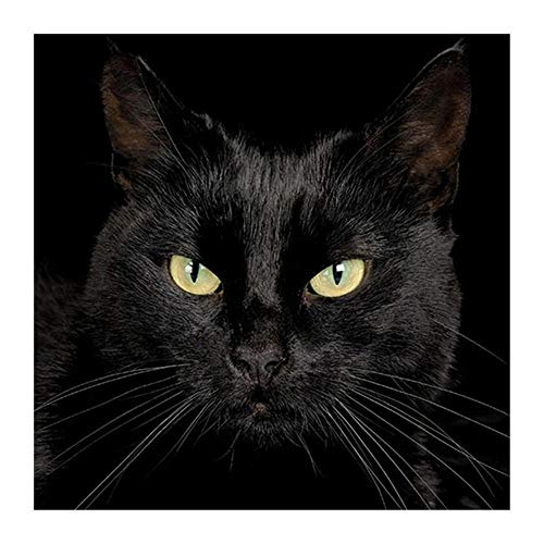 YINGXIN134 Rompecabezas de 4000 Piezas, Rompecabezas de Gato Negro - Cada Pieza del Rompecabezas es única - Póster de Rompecabezas Gratuito - Rompecabezas para Adultos 141.5 × 87.5cm
