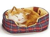 Teddys Rothenburg Katze im Körbchen, 14 cm, rot getigert, mit Stimme, Plüschtier, Plüschkatze
