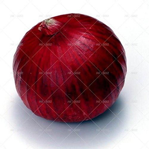 100 pcs/sac frais géant Graines d'oignon rouge et violet graines de légumes 95% de légumes à haute germination pour le jardin à domicile Livraison gratuite 1