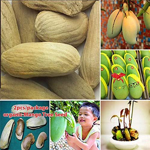 Go Garden E48C arbres fruitiers exotiques Graines Mango Tree Graines Bonsai Orchard Delicious 2 pièces/sac