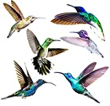 Hummingbird Window Clings - Anti Collision Decals to Prevent Bird Strikes on Doors & Windows - Static, UV Resistant & Non Adhesive Vinyl Cling - Deterrent Decal & Glass Decor to Alert Birds (1)
