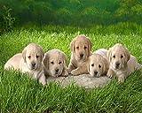 WQEFFTRW Nuevo Rompecabezas Educativo HD 500 PC AdultoCinco Cachorros Lindos en la Hierba Regalo Educativo para niños Decoración Creativa para el hogar Rompecabezas para niños