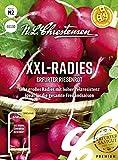 XXL- Radies Erfurter Riesenrot, Saatband sehr großes...