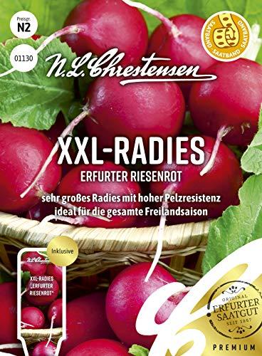 XXL- Radies Erfurter Riesenrot, Saatband sehr großes Radies mit hoher Pelzresistenz, Samen