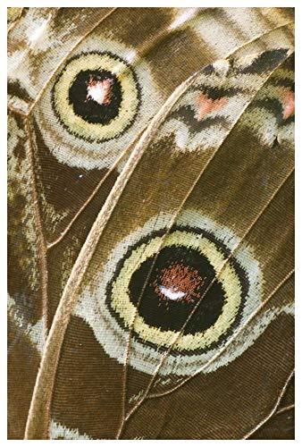 Obras de Arte Italia azul Morpho mariposa ala con falsos ojos espotes, Ecuador-Arte de papel-42x152cm