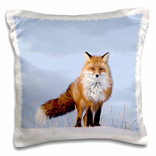 3dRose PC 191987_ 1Anwendung, Alaska, Arctic NAR rot Fox, Erwachsene Suche nach Food Kissen Fall, 40,6x 40,6cm