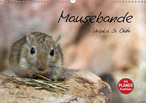 Mausebande (Wandkalender 2016 DIN A3 quer): Ein Kalender mit kleinen niedlichen Mäusen (Geburtstagskalender, 14 Seiten ) (CALVENDO Tiere)