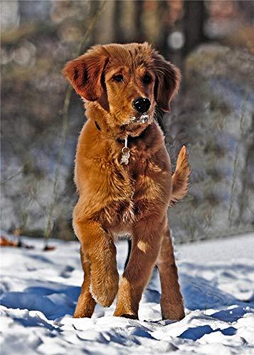 nobrand Puzzle 1000 Pezzi di Puzzle per Adulti Foto Selettiva del Cucciolo di Golden Retriever Scuro Si Trova sul Campo di Neve Puzzle per Regalo di Natale Amico di Bambini