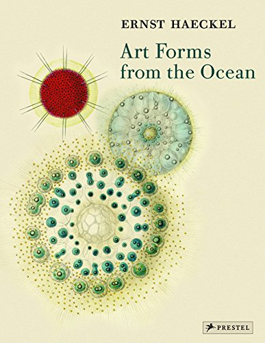 Ernst Haeckel Art Forms from the Océan /Anglais: The Radiolarian Prints of Ernst Haeckel