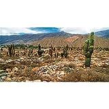 AWERT Fondo de terrario de vinilo duradero de 76 x 30 cm, cielo azul, oasis, cactus, piedra de gobi, hábitat de reptil, (no pegatina)