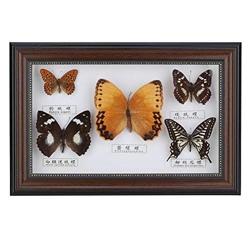 Wifehelper Exquisita Muestra de Insecto de Mariposas Regalo Hecho a Mano para Amigos Decoración del Hogar Adorno Mariposa Arte de la Pared(Negro)