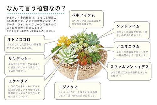 KISHIMA(キシマ)『エクリア消臭アーティフィシャルグリーン(KH-61024)』