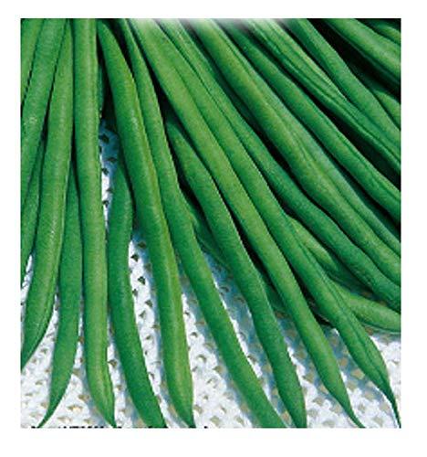 200 C.ca Semi Fagiolo Nano Scylla - Phaseolus vulgaris - In Confezione Originale - Prodotto in Italia - Fagioli - FG010