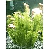 Miss de en acuario decoración 3pcs pescado Plantas de seda policíclicos plástico, no tóxico y seguro para todos los pescado & Pets Reservorio Artificial Verde Agua