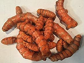 Turmeric Root - Whole Raw Organic Root - 5 Lb. Lots by Fiji Fresh