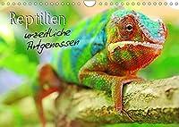 Reptilien urzeitliche Artgenossen (Wandkalender 2022 DIN A4 quer): Ein Muss fuer jeden Terrarianer (Monatskalender, 14 Seiten )