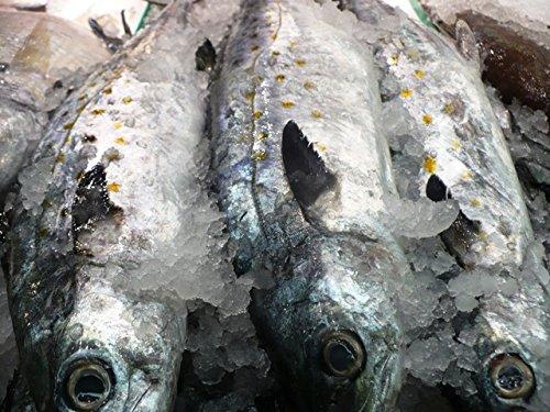 Mackerel - Świeża makrela