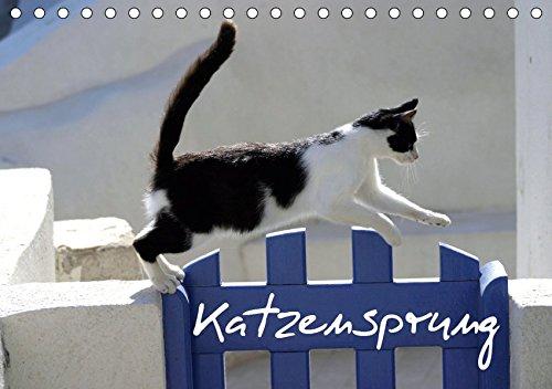 Katzensprung (Tischkalender 2019 DIN A5 quer): Foto-Katzen-Kalender zum Träumen (Geburtstagskalender, 14 Seiten ) (CALVENDO Tiere)