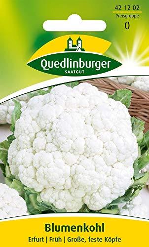 Quedlinburger Blumenkohl 'Erfurter Zwerg', 1 Tüte Samen