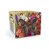 Butterfly Flower Bulb Box | Mischung Butterfly Blumenzwiebeln | Gemischte Farben | 100 Knollen