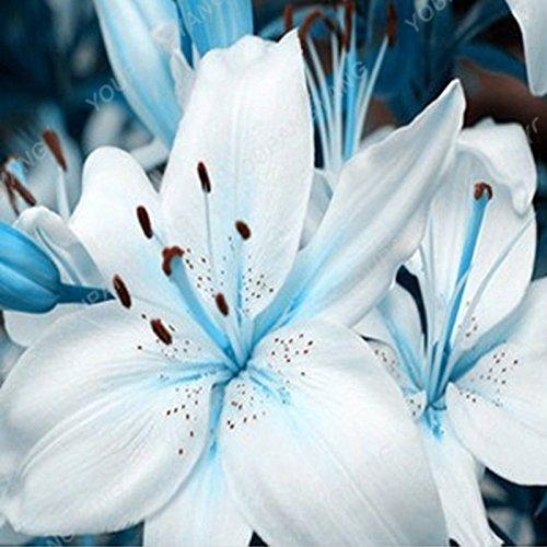 Promotion! 200pcs parfum Lily Graines de fleurs Germination 95% Creepers Bonsai Bricolage Jardin Fournitures Pots Planters Livraison gratuite Jaune clair