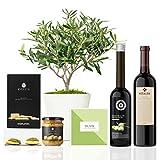 Lote Gourmet Regalo Green con árbol olivo natural prebonsai 38 cm en maceta de 16 cm diámetro, guía de cuidados, AOVE, crema de aceitunas, regañás y vino tinto ecológico entregado en caja de regalo