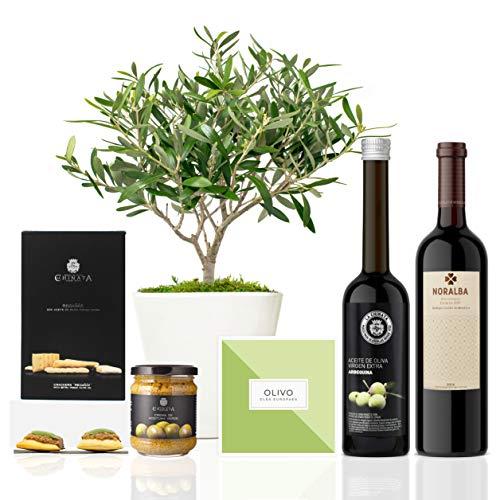 Lote Gourmet Regalo Green con árbol olivo natural 38 cm en maceta de 16 cm diámetro, guía de cuidados, AOVE, crema de aceitunas, regañás y vino tinto ecológico entregado en caja de regalo