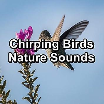 Chirping Birds Nature Sounds