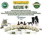 Broadreach Nature + Urinaire, Cystite et Calmant Supplément pour Chats - Récompensé Produit ! Naturel - Ingrédients - Advanced UK Vétérinaire - Formule 100 Capuchons #1