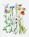 Thea Gouverneur - Kit de punto de cruz, 577A - Hilos DMC preclasificados - Flores silvestres - Aida - 20 x 25,9 cm - Kit de bricolaje