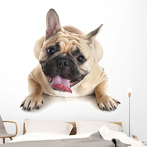 Wallmonkeys French Bulldog White Wall Decal Peel and Stick Graphic (60 in H x 45 in W) WM359392