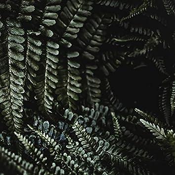 Melodías De La Naturaleza Ambiental | Sueño Profundo