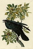 John James Audubon ジクレープリント キャンバス 印刷 複製画 絵画 ポスター (カラス) #XFB