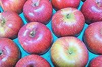 長野県産 生産農家直送りんご 「あいかの香り」自家用ランク 10~20玉 約4.7~5kg入り/箱 収穫&発送は11月中旬頃から順次開始予定!(熟度の進行具合により収穫時期は前後します)