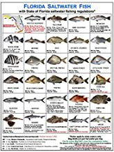 Tackle Box I.D. Florida Fish Identification Card Set - Three Cards, 59 Common Fish - 17 Common Sharks - New Feb 1, 2020 Spotted Seatrout Rules and Zones