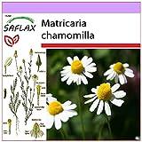 SAFLAX - Manzanilla común - 300 semillas - Matricaria...