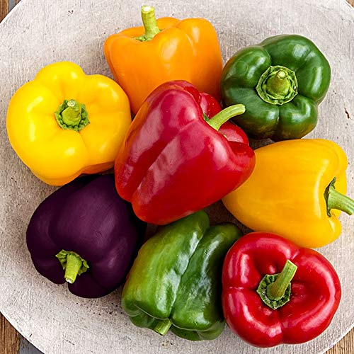 Rainbow Sweet Bell Pepper Seed Mix for Planting About 40 Seeds