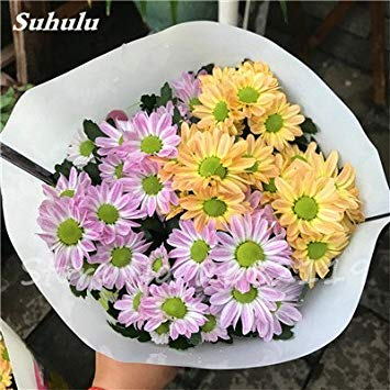 120 pcs graines graines de fleurs Daisy strawberry marguerite, fleurs de saison graines chrysanthème, Bonasi beau balcon fleuri coloré 14