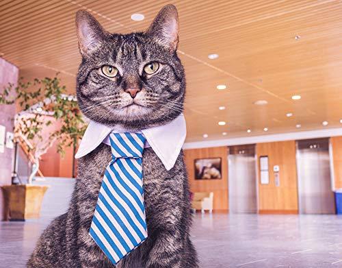 nobrand Puzzles 1000 Stück Puzzle DIY Adult Child Puzzle Brain Game Geschenk Krawatte Cat