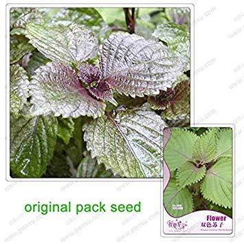35 graines/Pack, graines couleur Suzi, jardin pour cultiver des légumes biologiques peuvent être utilisés pour améliorer Choi Heung au goût