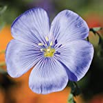 Mixed Cottage Garden Flower Seed Annuals Grow Your own Colourful Plants Such as Cornflowers, Mallow & Marigolds 1 x 15g Pack by Thompson & Morgan