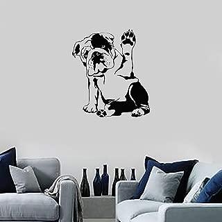 Copripiumino Bulldog Inglese.Supmsds Bulldog Inglese Cane Da Compagnia Veterinario Grooming