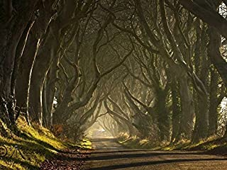 Dark Hedges Northern Ireland -Oil Painting On Canvas Modern Wall Art Pictures For Home Decoration Wooden Framed (20X16 Inch, Framed)