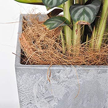 A-A Fibre de coco pour nid d'oiseau - 100 g - Matériau naturel - Litière confortable - Pour petits oiseaux et animaux