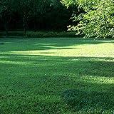 Beautytalk-Garten Rasensamen Immergrüne Rasenpflanze Rasen Reperatur winterhart mehrjährig Rasensamen Spiel und Sport Rasensamen,pflegeleicht