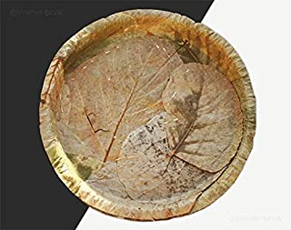 Best leaf plates india Reviews